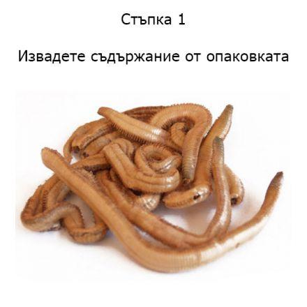 Сушени земни червеи Dynabait Freeze Dried Earth Worms