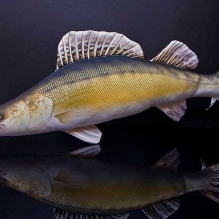 Възглавница-риба Бяла РИба