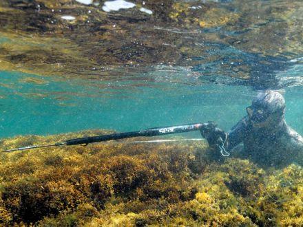 Пневматичен харпун Seac Sub Shotgun 90